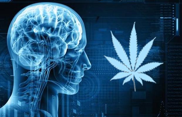 braincannabis